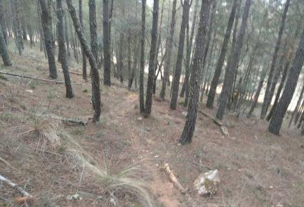 Pa matarse entre los pinos
